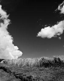 Wheat field in Ubate Colombia von Fabian Medina
