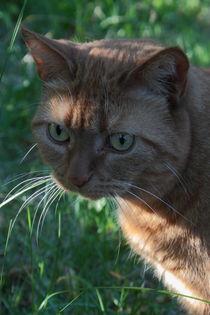 rote Katze by Christine Bässler