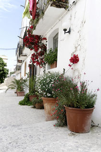 Haus Blumen by Eric Anders