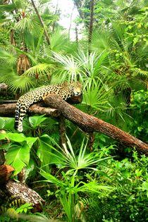Jaguar im Dschungel im Regenwald von Belize von Mellieha Zacharias