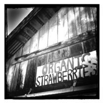 organic strawberries by Tony Tibbitts