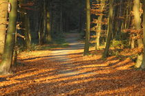 Im Wald by michas-pix
