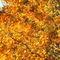 Herbstgold3