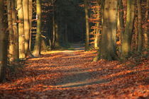 Waldweg im Herbst by michas-pix