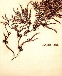 Sargassum sketch by nica-breeze