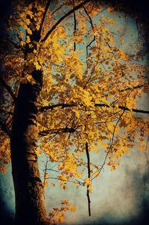 Herbstzeit  von AD DESIGN Photo + PhotoArt