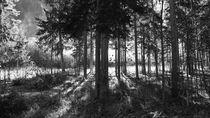 Frühnebel im Wald by fattygraphics