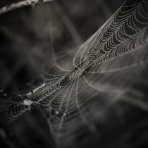 Early morning's magic III by Lina Gavenaite