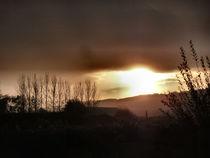 The Morn by Debra  Collins