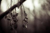 Colorless von Lina Gavenaite