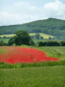 The Poppy Field. by Debra  Collins
