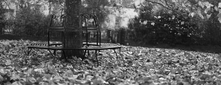 Autumn-bench-bw