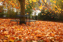 Autumn Seat 2 by Mark Rowland
