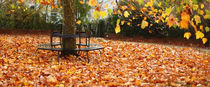 Autumn Seat von Mark Rowland