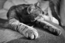 Sleeping claw by Anatoly Tulaev