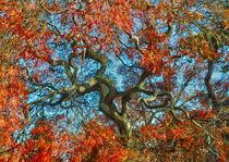JAPANESE TREE IN AMERICA. NY. von Maks Erlikh