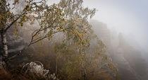 Eisiger Nebelherbst by Thomas Mertens
