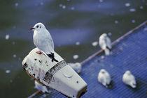 Sitting bird von Frank Sverak