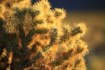 Cactus in Late Afternoon sunlight. von Brian  Leng