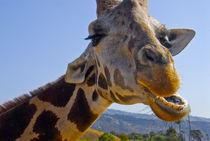 C.U.Giraffe's face von Brian  Leng