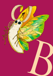 Banana Butterfly von Chrissy Culver