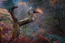 The Ruin by Bernard Cavanagh