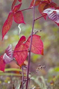 One autumn morning... von Lina Gavenaite