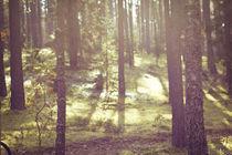 One autumn morning... by Lina Gavenaite