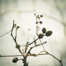 Frost & beauty von Lina Gavenaite