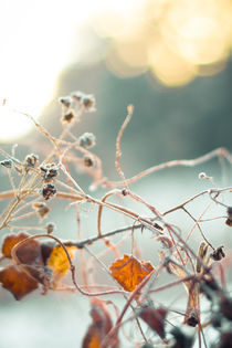 Img-1145-1a