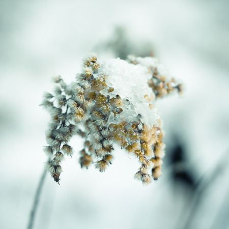 Img-1174-1a