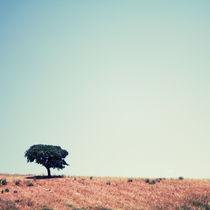 Lonely tree in the field von Amirali Sadeghi
