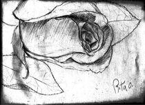 Rose by Rita Oliveira