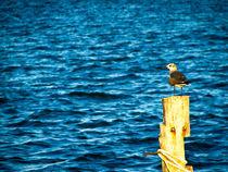 Seagull von Noe Casas