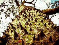 Ceiba Three von Noe Casas