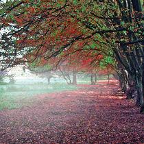 Herbstimpressionen  von artalacard