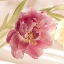 Tulip blossom von Lina Gavenaite
