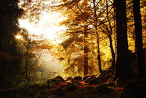 Waldlichtung von Karin Stein
