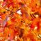 Autumn-paint-3-de-5