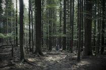 Forrest von Michaela Kfir