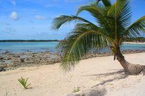 Traumhafter Strand mit Palme an der Karibikküste von mellieha