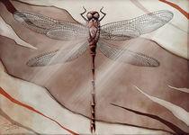 DRAGONFLY by Franziska Franke