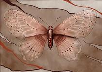 BUTTERFLY by Franziska Franke
