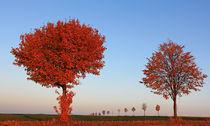 Herbst im Abendlicht by Wolfgang Dufner