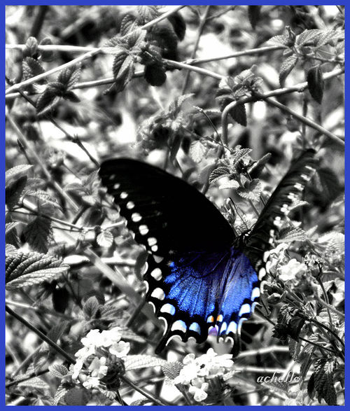 Butterfly-cropped-colorbw-w-sig