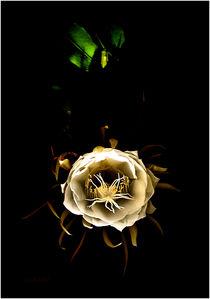 night blooming cereus von Terry Rogers