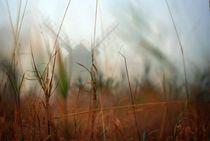 Im Nebel by Christian Stein