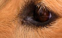 Brushed Eye von Joel Gafford