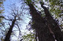 Angled Trees of Thorns von Joel Gafford
