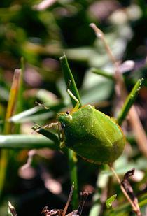 Green Bug von Joel Gafford